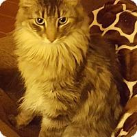 Adopt A Pet :: Moki - Tucson, AZ