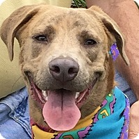 Adopt A Pet :: Gilly - Evansville, IN