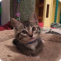 Adopt A Pet :: Mindo - San Jose, CA