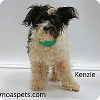 Adopt A Pet :: Kinzie - Waterbury, CT