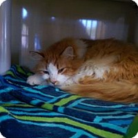 Adopt A Pet :: Hooch - Fort Collins, CO