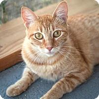 Adopt A Pet :: Peaches - St Helena, CA