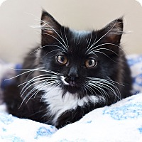Adopt A Pet :: Kimmy - Xenia, OH