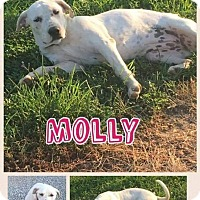 Adopt A Pet :: Molly - Mt. Vernon, IL