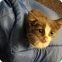 Adopt A Pet :: A393702 Liepard - San Antonio, TX