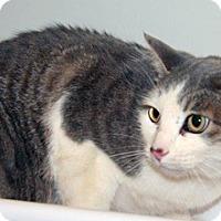 Adopt A Pet :: Suzy Q - Wildomar, CA
