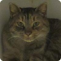 Adopt A Pet :: Columbia - Lloydminster, AB