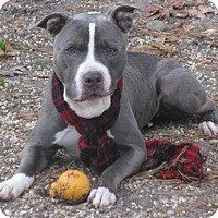 Adopt A Pet :: Gulliver - Voorhees, NJ
