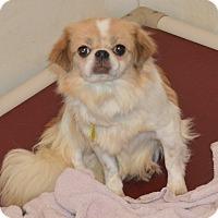 Adopt A Pet :: Alice - Prole, IA