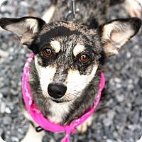 Adopt A Pet :: Dixie - West Grove, PA