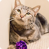 Adopt A Pet :: Angeline - Chicago, IL