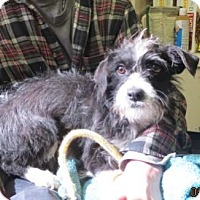Adopt A Pet :: Cici - Monte Vista, CO