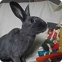 Adopt A Pet :: Dumbledore - North Gower, ON