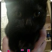 Adopt A Pet :: Lily - Norfolk, NE