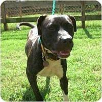 Adopt A Pet :: Diesel - Okatie, SC