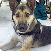 Adopt A Pet :: Honey - Evergreen Park, IL