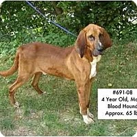 Adopt A Pet :: I.D. # 691-08 - ADOPTED! - Zanesville, OH