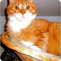 Adopt A Pet :: Schmooky - Medway, MA