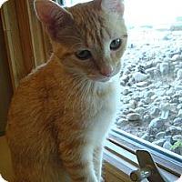Adopt A Pet :: Moe - Byron Center, MI