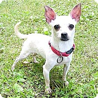 Adopt A Pet :: Bianca - Mocksville, NC