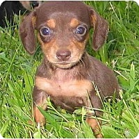 Adopt A Pet :: KELSEY - Portland, OR