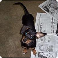 Adopt A Pet :: Mathis - Adamsville, TN