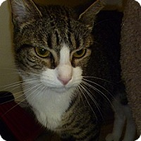 Adopt A Pet :: Nancy - Hamburg, NY