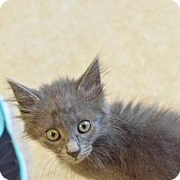 Adopt A Pet :: Jerry - Island Park, NY