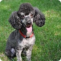 Adopt A Pet :: BUZZ - Elk River, MN