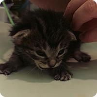 Adopt A Pet :: Candice - Edmonton, AB