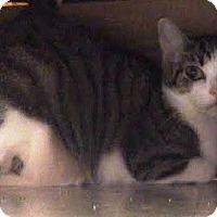 Adopt A Pet :: Mimsy - Nolensville, TN