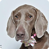 Adopt A Pet :: *Gia - Birmingham, AL