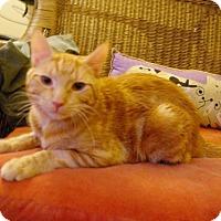 Adopt A Pet :: Emery - New York, NY