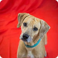 Adopt A Pet :: Phil - Bradenton, FL