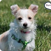 Adopt A Pet :: Fresca - Lee's Summit, MO