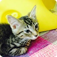 Adopt A Pet :: Flash - Warren, OH