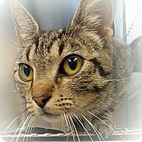 Adopt A Pet :: sam - muskogee, OK