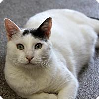 Adopt A Pet :: Boomer - Sarasota, FL