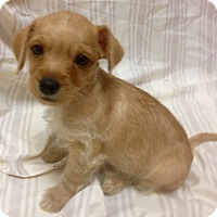 Adopt A Pet :: Woody (ARSG) - Santa Ana, CA