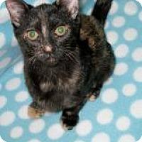 Adopt A Pet :: Petra - Union, KY