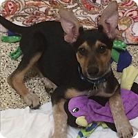 Adopt A Pet :: Nevada - Thousand Oaks, CA