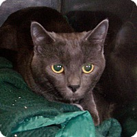 Adopt A Pet :: Shadow - Fall River, MA