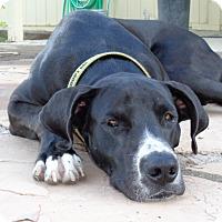 Adopt A Pet :: Valor - Phoenix, AZ