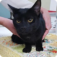 Adopt A Pet :: Zodiac - Port Hope, ON