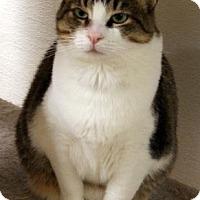 Adopt A Pet :: Cupcake - Fresno, CA