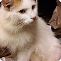 Adopt A Pet :: Sampson - Atlanta, GA