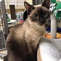 Adopt A Pet :: Precious - Maryville, MO