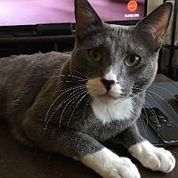 Adopt A Pet :: Buck - San Jose, CA