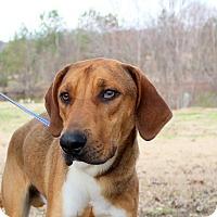 Adopt A Pet :: Woodrow - Glastonbury, CT