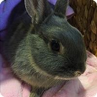 Adopt A Pet :: Lavender - Winnipeg, MB
